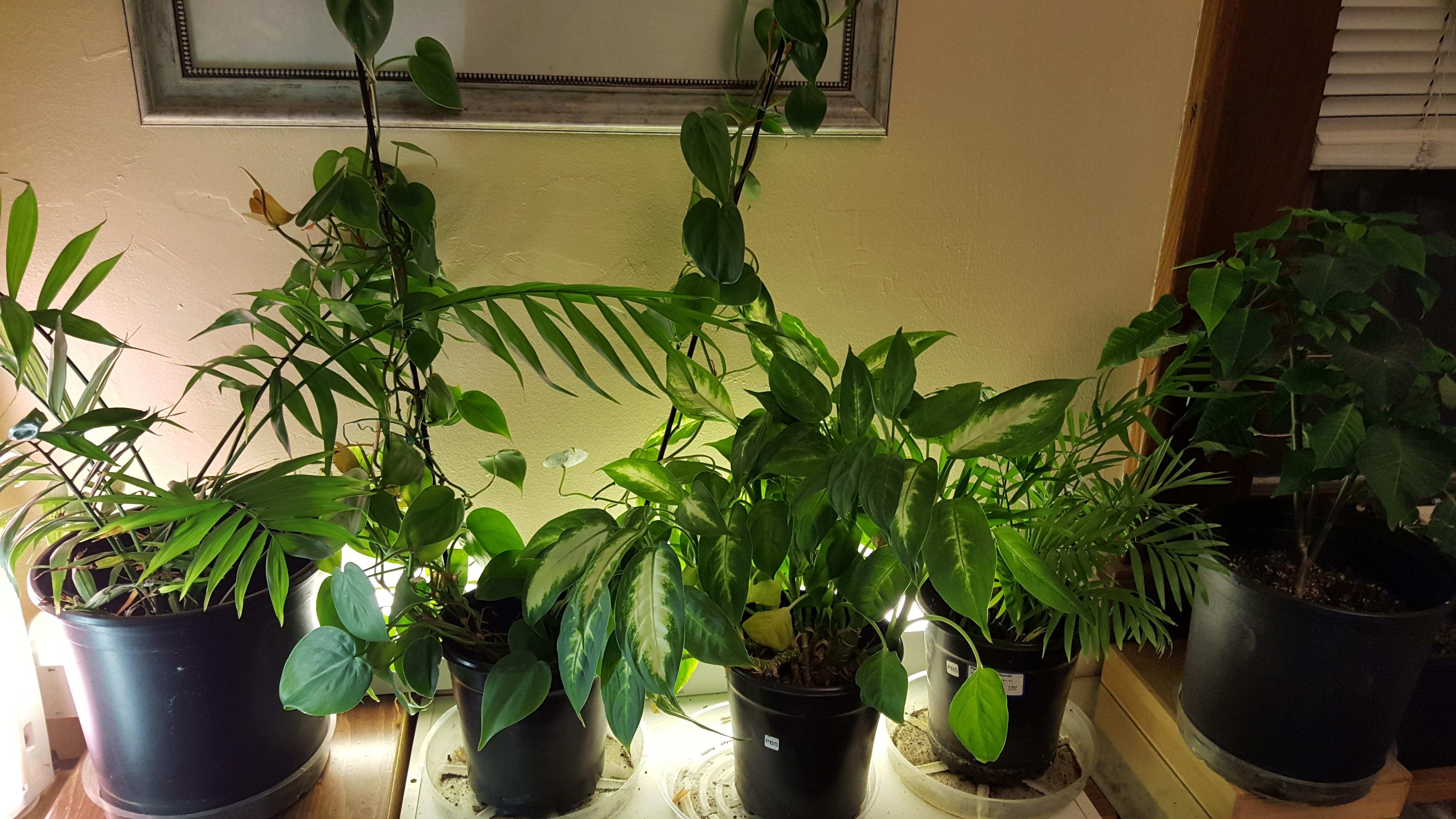 Indoor Garden Lighting Part - 36: Indoor Gardening U2013 Kickoff Your Indoor Garden In The Fall